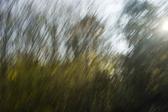Foliage Blur Stock Photography