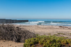 Foliage on Border Field State Park Beach with Border Wall. Foliage on Border Field State Park beach with the international border wall separating San Diego stock photo