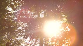 Foliage and bright sun. Tree branches and leaves. Follow your bliss stock video footage