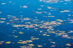Foliage on clear water is one of the signs of` Indian summer ` in Russia. Beautiful and sad time in Gatchina Park royalty free stock photography