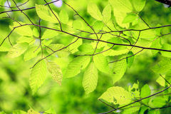 Foliage Stock Photos