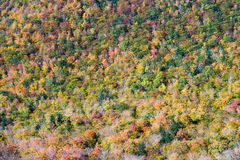 Foliage colors in Franconia notch state park, new hampshire Royalty Free Stock Photo