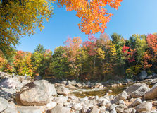 Foliage colors and vegetation near a river Royalty Free Stock Images