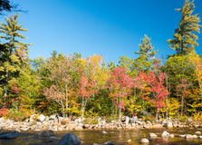 Foliage colors and vegetation near a river Stock Photography