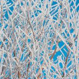 Foliage Covered in Hoar Frost stock photo