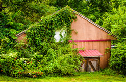 Foliage covering an old shed in rural York County, Pennsylvania. royalty free stock photo