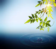 Foliage and drops falling in water. With sunbeams stock illustration