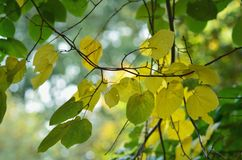 Foliage in fall Royalty Free Stock Photography