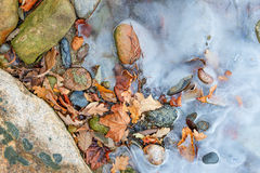 Foliage in the first ice. Oak leaves in the frozen sea water in October evening. Close up Stock Images