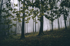 Foliage in a forest with mysterious fog Stock Photography