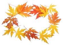 Foliage frame royalty free stock photos