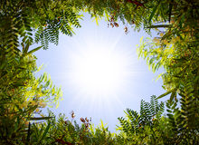 Foliage Frame Stock Photography