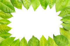 Foliage frame Stock Photography