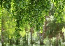 Foliage, freshness, summer Stock Image