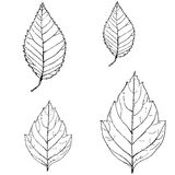 Foliage. Graphic illustration of birch and poplar leaves Stock Photo