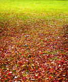 Foliage on grass. Foliage in autumn colors on grass stock photos