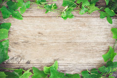 Foliage grass on grain wood Stock Images