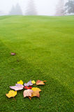 Foliage on Green Royalty Free Stock Photo