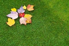 Foliage on Green stock photos