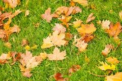 Foliage Royalty Free Stock Photography