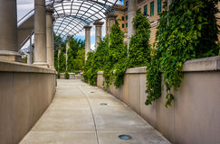 Foliage hanging along a walkway at Pack Square Park in Asheville Royalty Free Stock Image