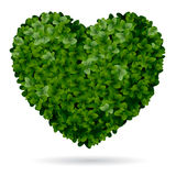 Foliage heart Stock Image