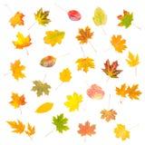 Foliage isolated Stock Image