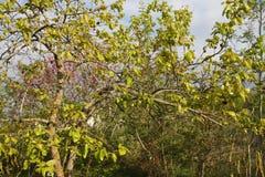 Foliage of khaki. In spring Stock Photos