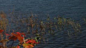 Foliage landscape with lake stock footage