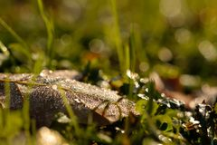 Foliage leaf with dew in backlight with bokeh Stock Photos