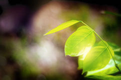 Foliage leaves background Royalty Free Stock Photography
