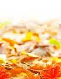 Foliage leaves background Stock Image