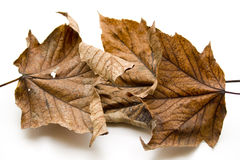 Foliage leaves Royalty Free Stock Photography