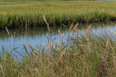Foliage and Marshland at Pleasure House Point in Virginia Beach Royalty Free Stock Photo
