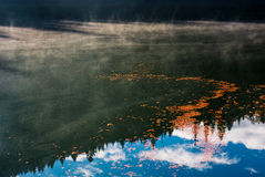 Foliage on the misty water surface. Beautiful nature background of foliage on the misty water surface reflecting spruce forest royalty free stock image