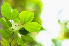 Foliage nature spring background blank for design.  stock image