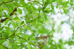 Foliage nature spring background blank for design.  stock photography