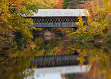 Foliage in New Hampshire stock images