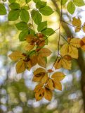 Foliage and nice bokeh background royalty free stock photo