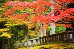 Foliage in Nikko Royalty Free Stock Images