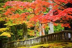 Foliage in Nikko. Autumn foliage in Nikko, Japan Royalty Free Stock Images