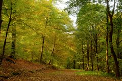 Foliage in October / Laubwald im Oktober. Forest path covered with foliage in autumn stock photography