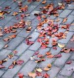 Foliage On Pavement Stock Images