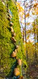 Foliage over a tree stock photos
