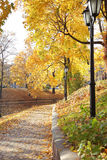 Foliage in park Stock Image