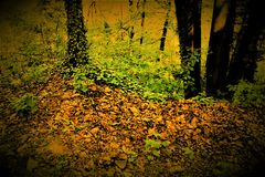Foliage. In the path. Italy 2017 Royalty Free Stock Photos