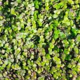 Foliage Pattern Royalty Free Stock Photography
