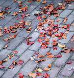 Foliage on pavement. In October,outdoor stock images