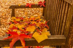 A foliage pillow on a bench in a woodland. The seat of a bench covered with colored leaves fallen from the trees Stock Image