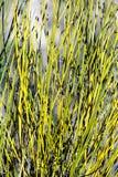 Foliage plant. Beautiful flora botany foliage plant Royalty Free Stock Images